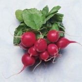 樱桃萝卜(Cherry Radish)