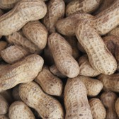 鲜花生(Fresh Peanut)
