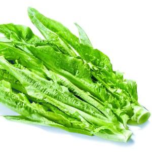 油麦菜(Leaf Lettuce)