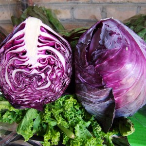 紫甘兰(Purple Head Cabbage)