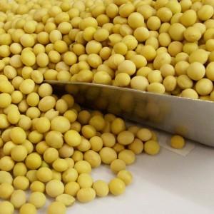 有机发芽黄豆(Organic soybean)