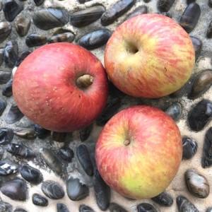 高山红将军苹果(Mountain apple)
