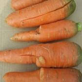 次级胡萝卜(2斤装)