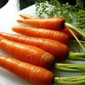 手指胡萝卜